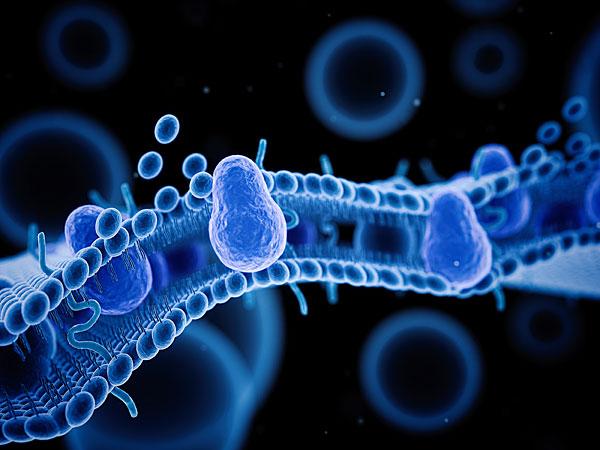dolichols, cell memebrane, protect cells, oxidative stress, dolichols